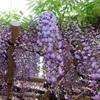 古都奈良の春日大社、若草山、五重塔へ散策してみる!シカに癒された一日♬