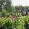 フォトログ:上野ファームさんの夏の終わりから秋も美しい北海道のガーデン【北海道旭川市】