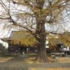 5番札所の地蔵寺にある樹齢800年超の大イチョウ