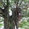 南島の詩人 八重洋一郎の「先生」という詩