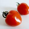 【トマトベリー】いちごみたいなトマト