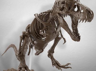 """太古の記憶から紡がれる""""肉食恐竜の王"""" Imaginary Skeleton ティラノサウルスのご紹介‼"""