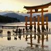 広島県 宮島 干潮131cm 日没後 厳島神社 大鳥居、硬い浜、神秘的な風景、ライトアップで黄色の大鳥居