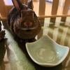 ウサギのちまき今日の1枚『もう、ないんですけど』