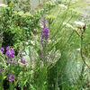初夏の花が咲き始めた庭