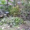 もくもくと庭木を切り、ひたすら枝葉を始末すること