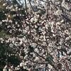 春の気配と血糖値実験と湘南ツーリング準備と