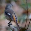日本 隣の栗畑を訪れる冬の野鳥たち