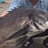 堤防チニングで真チヌの活性が最も高い時期と時間帯とは?