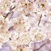 新年度はもうすぐ 今年の春こそ、始めてみませんか