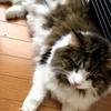 【猫さんと暮らす】暑い日は猫さんが落ちています
