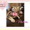 猫ちゃんのお写真紹介.第21段
