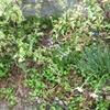 それ 気象病かも?な話と うちの庭のチューリップ