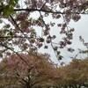 雨の日も、「一日一万歩」を続けるコツ