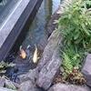 【大阪・神戸】旅行記③:ウェスティンホテル大阪でプール遊び