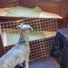 ❝階段の衝撃吸収&滑り止め❞   愛犬と暮らす家の工夫③
