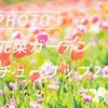 花菜ガーデンの春:Sony α7c + SEL135F18GM