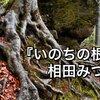 【格言】いのちの根/相田みつを