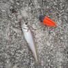 釣りの素質なし