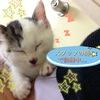 里親募集仔猫ちゃん追記 ※6/20里親決定