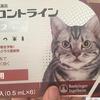 【猫のノミ・ダニ対策】フロントラインプラスを使ってみた!自宅で簡単ノミ・ダニ駆除