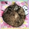 暑くなると猫ものびるね&お家にあるもので美味しいフォーの食べ方を発見した!【庄内】