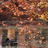 紅葉を撮りに京都へ その2 京都府立植物園