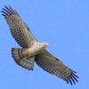 初詣を迎える息栖神社と初夢の鷹たちの写真