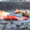 雨の日に聴きたい曲◆3曲