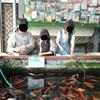 雨の日のお出かけに最適!!大阪の釣り堀in京阪錦鯉センター