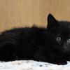 NO.2119 黒ネコ雑種 ♀