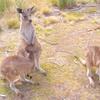 【日本と季節が逆の国】オーストラリア旅行のおすすめ観光スポット10選