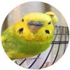 【インコ】魚眼レンズアプリ