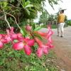 タイ・田舎の日々