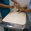 狂犬病ワクチン