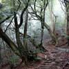 上野道から山寺尾根へのハイキング(その1)上野道