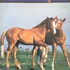 1977. 【サラブレッド・レーシング】1978年1歳募集馬 1977年度産駒
