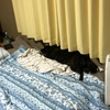 甲斐犬、忍犬修行をするの巻〜ドロン!!  ω・)  ・)  ) ※パッ ドロン‼︎