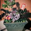 12月の寄せ植え -お正月の寄せ植えー