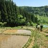 「都市農村交流企画 つなぐるる」の田植え体験に参加してきた!@長野県中条