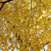 ワンランク上の紅葉の名所の作り方