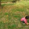 無限のリンゴひろいに夢中