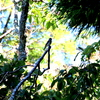 木立の中のエゾビタキ