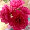 映画鑑賞と花と植物の摘み取り。