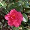 聖書の植物(11)ー「いなご豆」