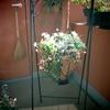 春の寄せ植え - 巣立ち ー