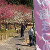 赤塚山公園 梅まつり(豊川)