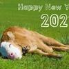 特別な2021年と何気ない2021年、どちらも希望