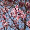春の庭・空に近い樹木の紹介