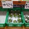 直七  今が収穫最盛期  バランスの良い味と香りの高知県宿毛市特産の酢みかん